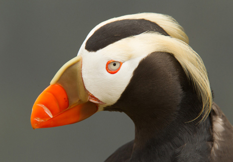 Puffins and More Adventure in Alaska