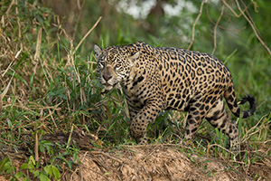 Pantanal Photography Tour - Wildlife & Birds