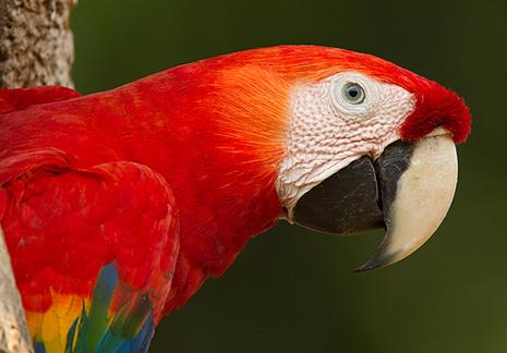 Quetzals, Toucans, Hummingbirds - Costa Rica